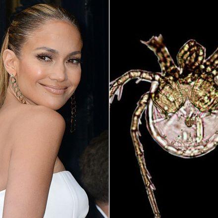 Al lado izquierdo la imagen de Jennifer López y a du derecha la nueva especie que se bautizó en su honor