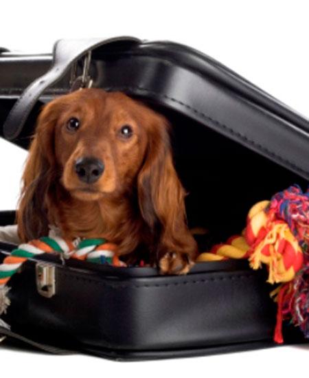 mascotas-viaje-interior-post